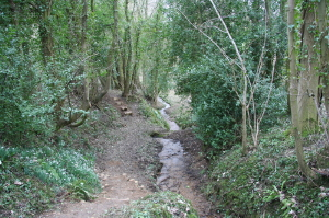 The view down the woodland stream from Valentine's Bridge