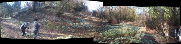 Panorama of snowdrops beneath the observatory, courtesy of Graham Whiting.